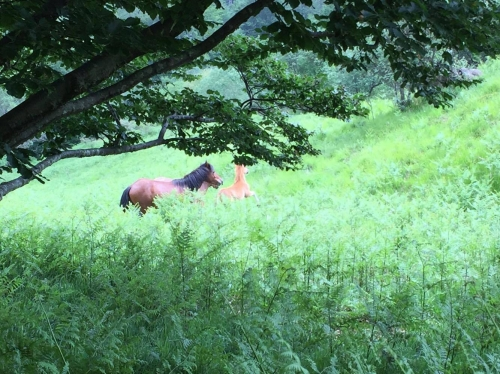 Una cavalla con la sua puledrina