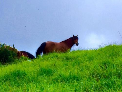 Un altro cavallo che ci sbircia dall'alto della collina: «Ma cosa vorranno questi bipedi?»