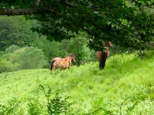 i cavalli selvaggi sono timidi