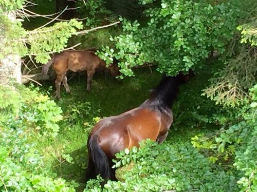 I cavalli sono ghiotti di foglie di faggio