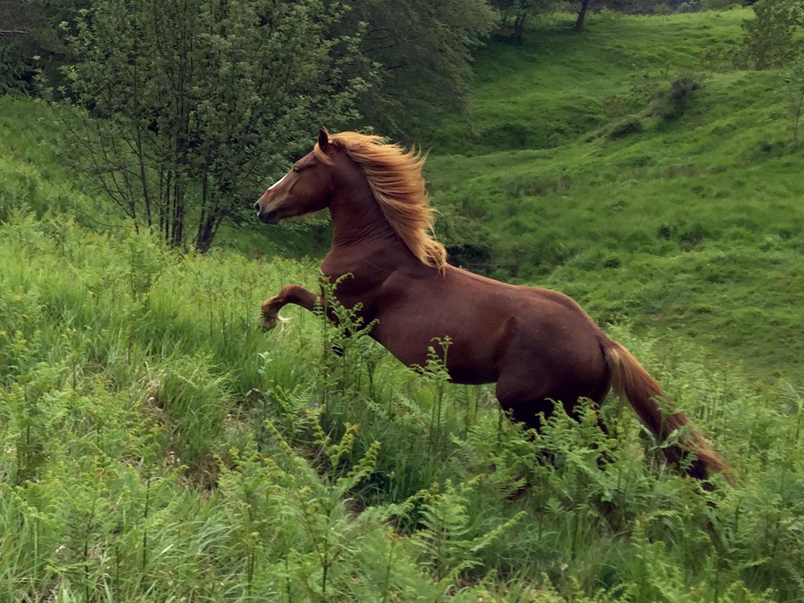 cavalli-val-aveto-cover