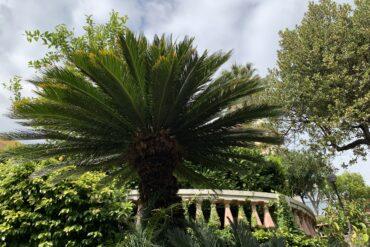 Il giardino di Villa Meridiana oggi
